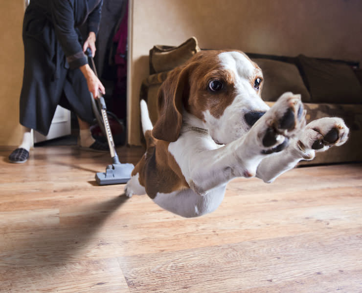 How to Get Your Dog To Listen To You Around Anything (Even Vacuum Cleaners)