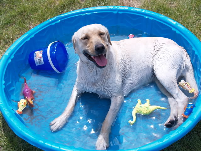 How to Keep Your Dog Cool During the Summer Months