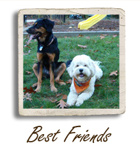 Picture of Dogs - Best Friends
