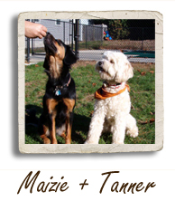 Maizie and Tanner Dog Picture