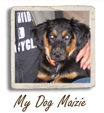 My Dog Maizie