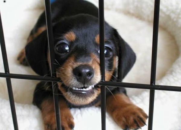Learn How To Stop Your New Puppy From Biting