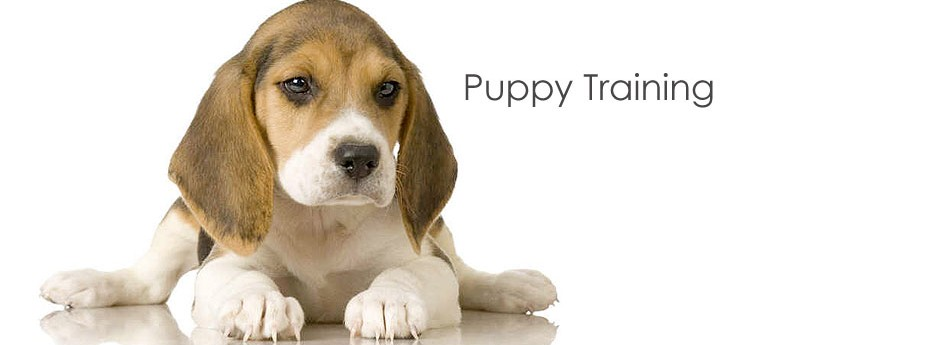 Puppy Training Shortcuts Everyone Should Know