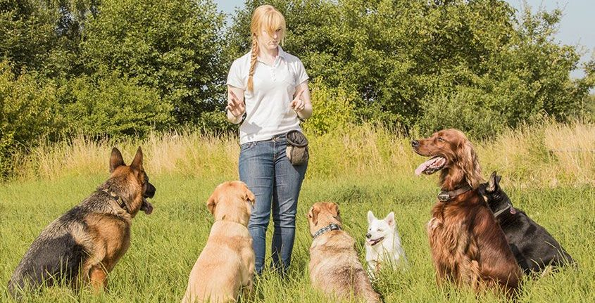 The Science and Art of Dog Training