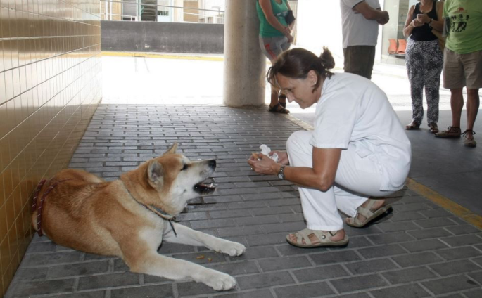 Loyal Dog Patiently Waits Outside Hospital For Sick Owner