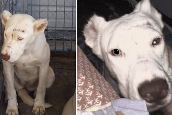 Scared Pup Wakes Up Rescuer In the Middle of the Night To Thank Her