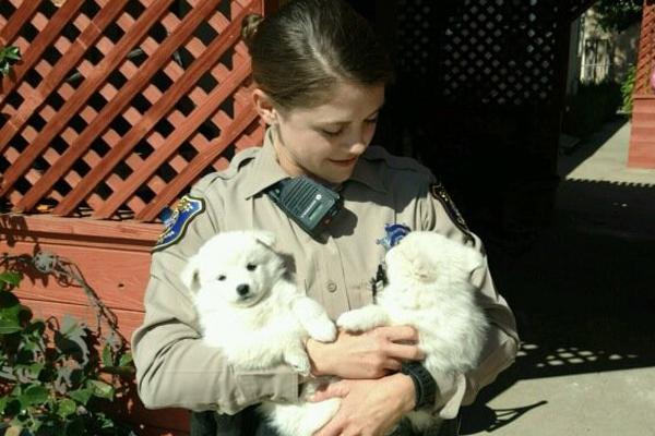 Deputies Make The Cutest Arrest After Burglary Alarm Goes Off