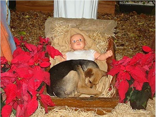 Stray Puppy With Nowhere To Go, Finds Solace in Nativity Scene's Manger