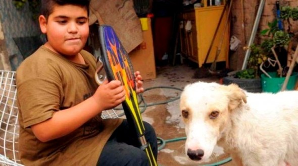 Boy Sells All of His Prized Possessions To Get Street Dog Urgent Medical Care