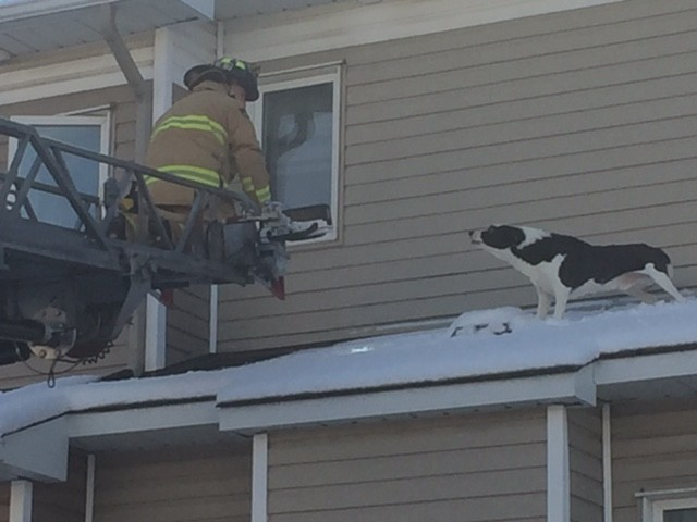 Curious Dog Climbs On The Roof of House All By Himself