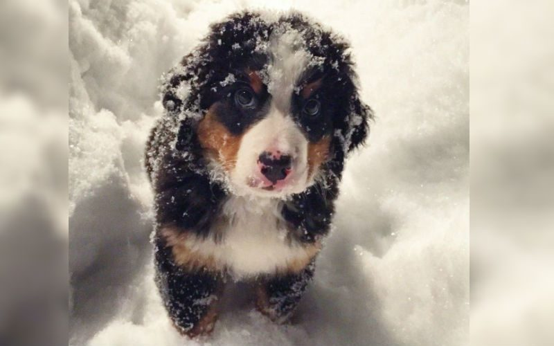 12 Puppies Enjoying The Snow For The Very First Time