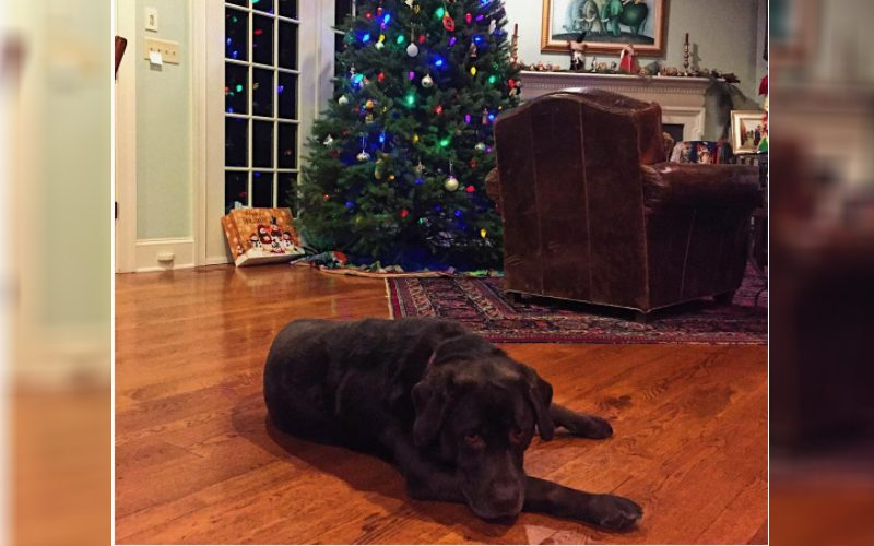 10 Pups Who Can't Believe Christmas is Over Already