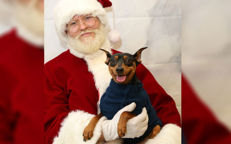 8 Adorable Pets Snuggling Their Way Into Santa's Arms Will Give You All The Feels