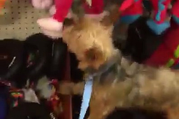 Dog Rescued From Puppy Mill Gets To Pick Out Her Very First Toy