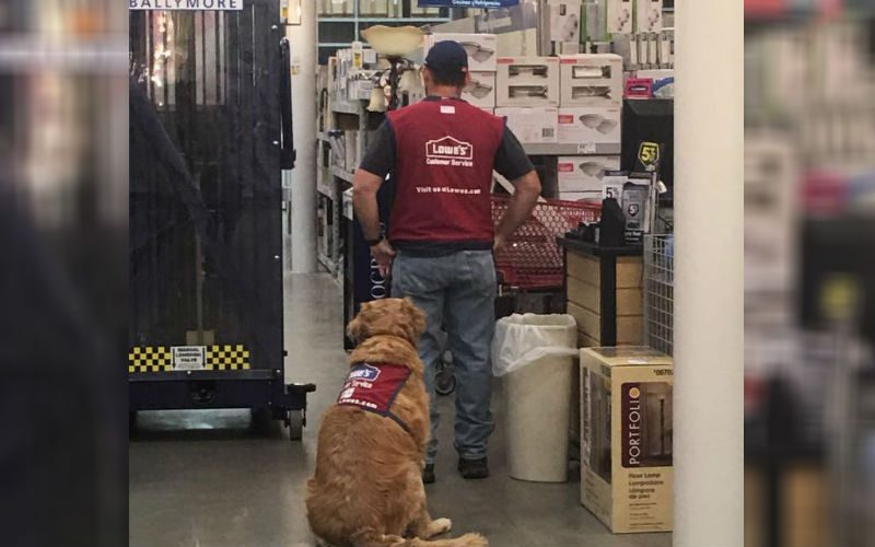 Military Vet With Service Dog Struggled To Find a Job-Until This Store Hired Him