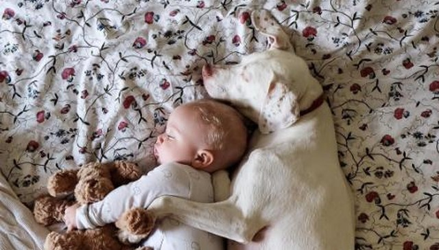 Neglected Pup Was Fearful of Everyone Except This Baby
