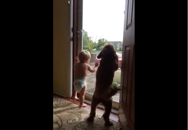 This Toddlers and Dogs Reaction to Daddy Coming Home is Priceless Footage