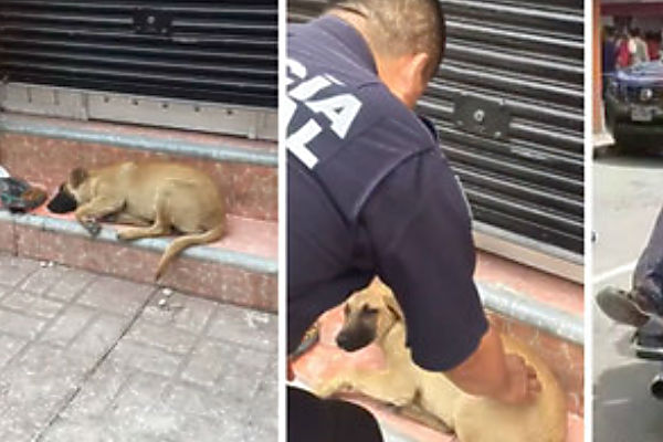 Cops Rescue Stray Pup Too Afraid To Move After Earthquake