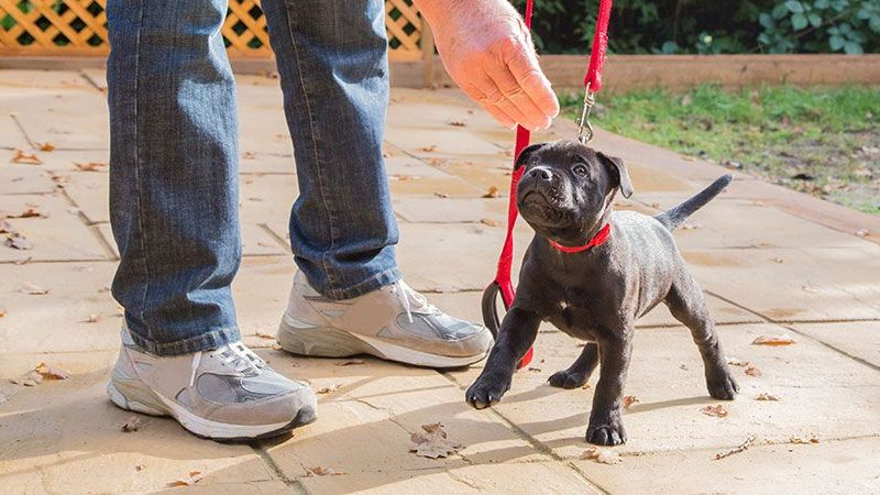 Three Things People Easily Forget When Training Their New Puppies