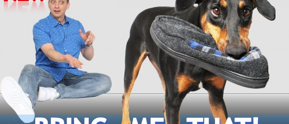 How to Teach Your Dog To Bring You Things