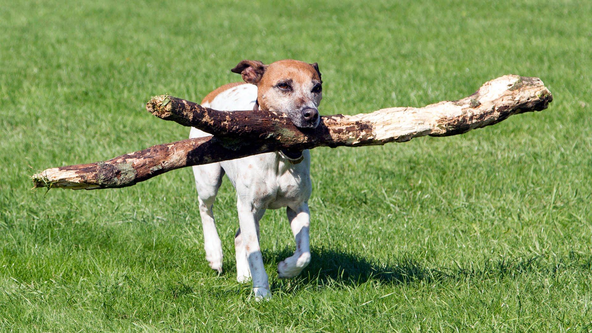 How Do I Train My Dog To Play Fetch