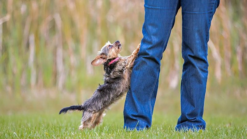 How To Teach Your Dog To Greet Visitors Calmly!