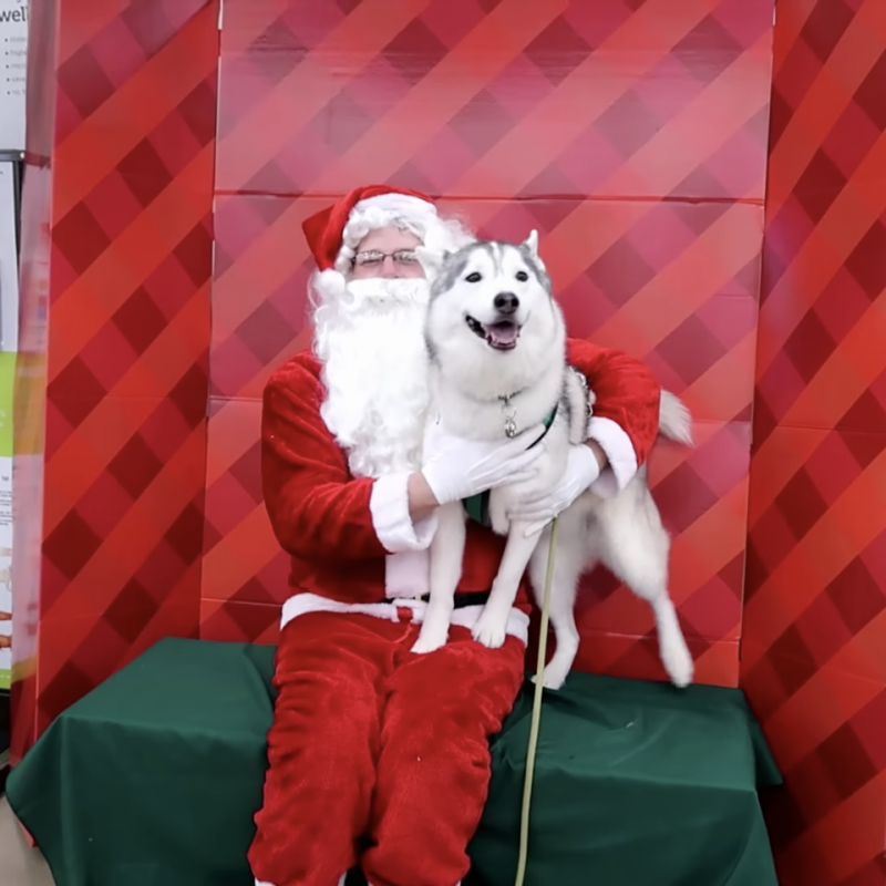 Watch: Memphis The Husky Meets Santa, The Internet is Melting