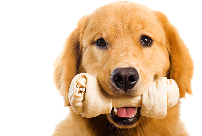 How to Train Your Pup Without Treats