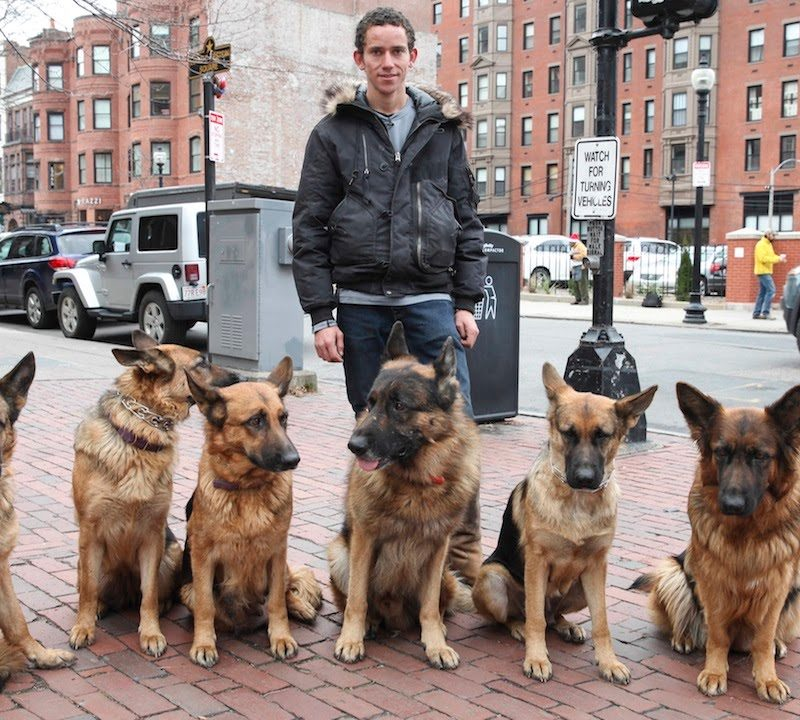 Meet The Dog Whisperer: Trainer Walks Pack Of Dogs Without A Leash