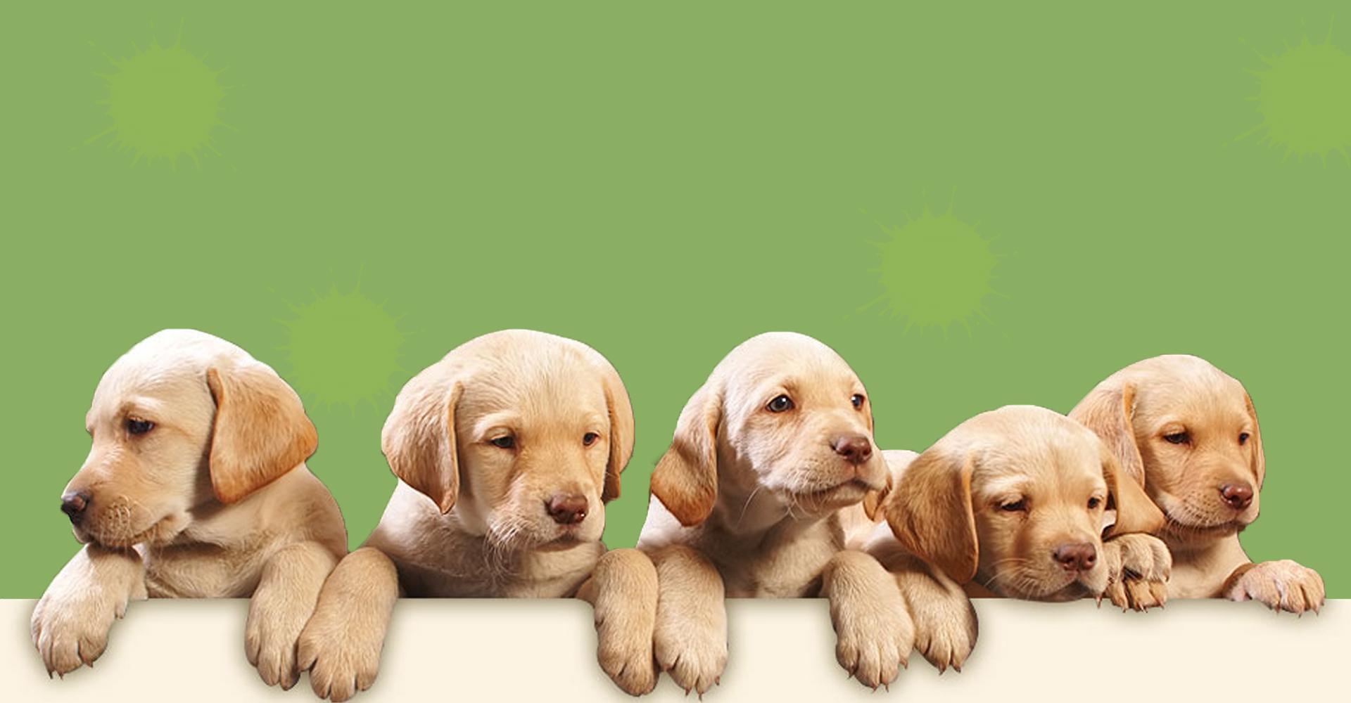 Dog Walking Prices Mansfield
