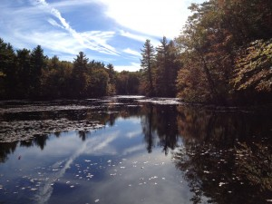 Walpole State Forest