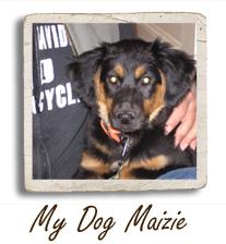 My Dog Maizie