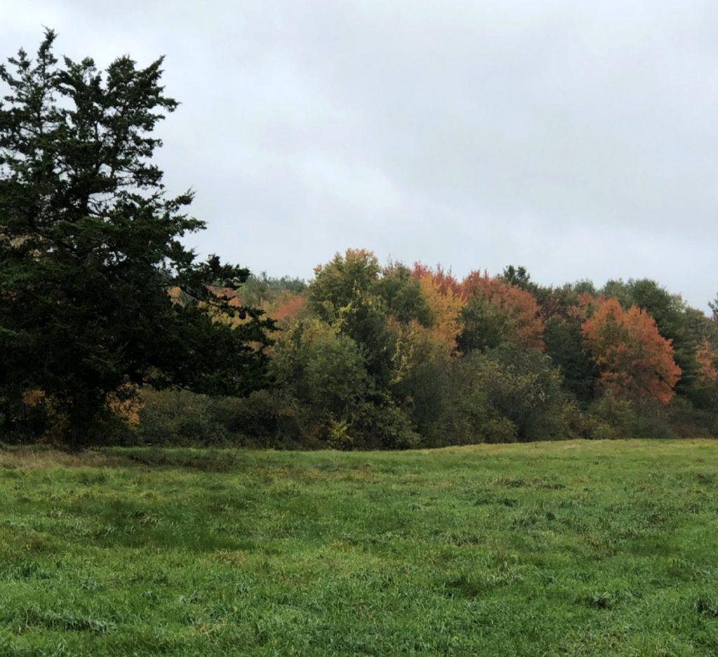 Oak Grove Farm