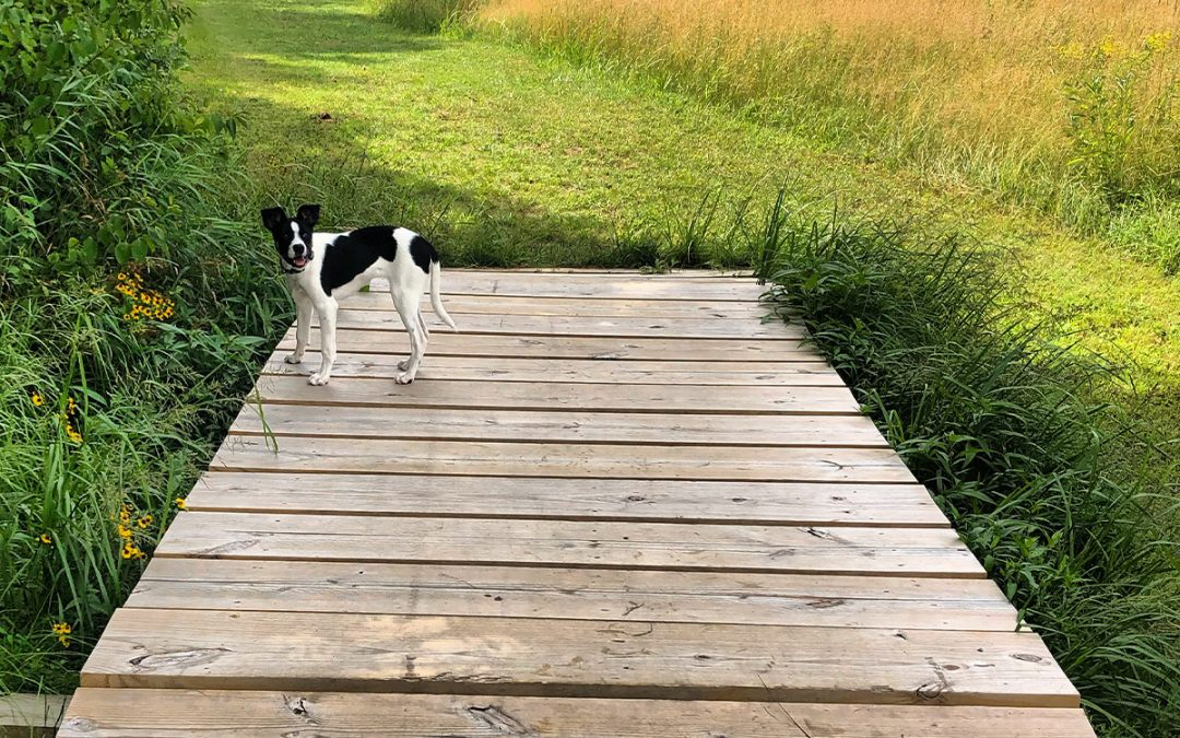 Norfolk MA Dog Walking